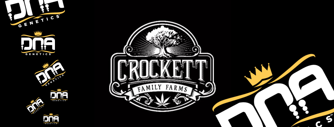 DNA GENETICS - CROCKETT´S FAMILY FARM | SEMENACANNABIS.CZ